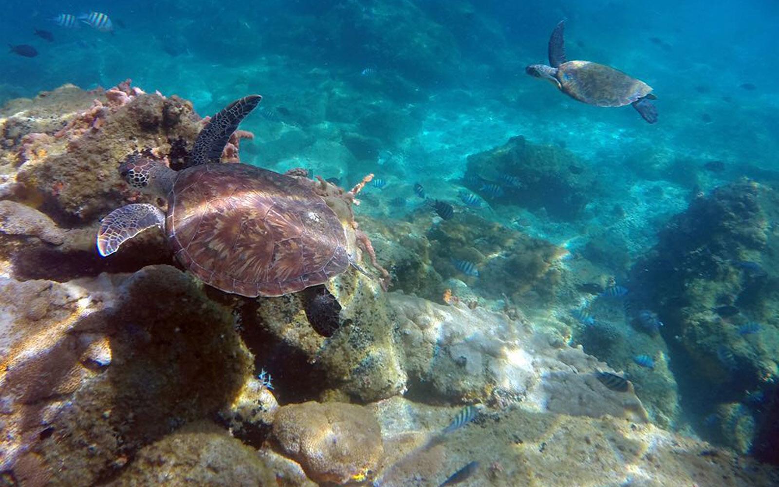 Tartaruga Marinha - Ilha Grande