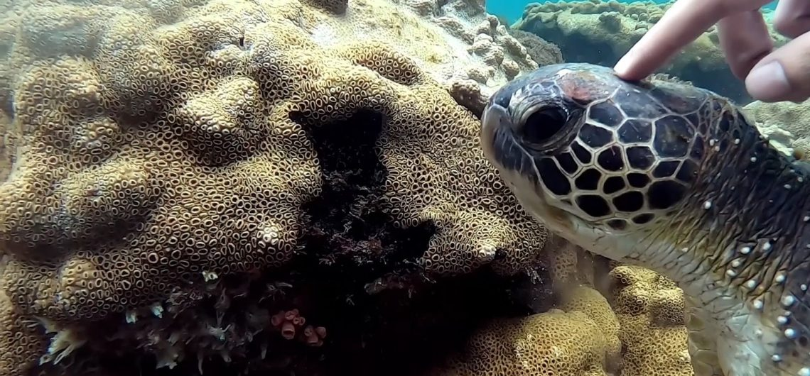 Tartarugas Marinhas na Ilha Grande